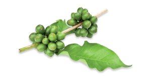 caffe verde